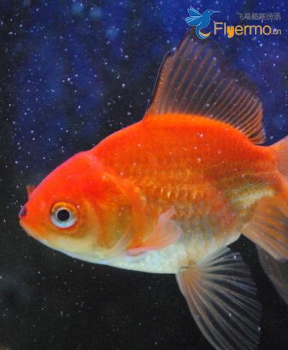 老人经常吃鱼可以预防老年痴呆