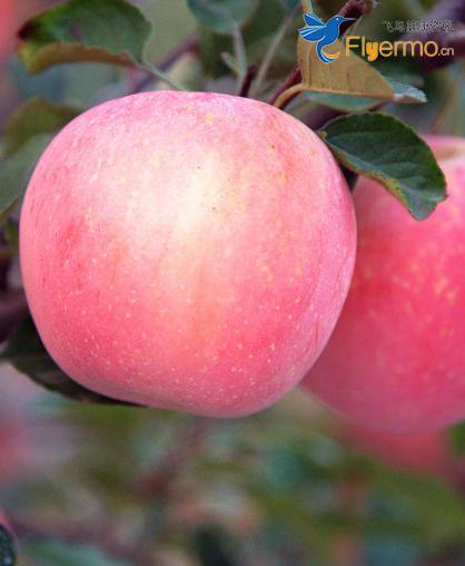 老人吃苹果原来有这么多好处