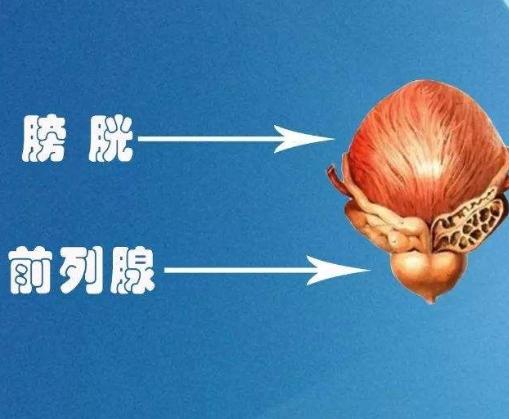教你如何区分前列腺炎和前列腺肥大!